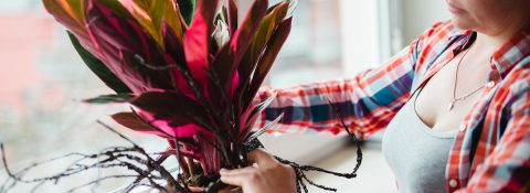 Aranżacje roślinno-dekoracyjne